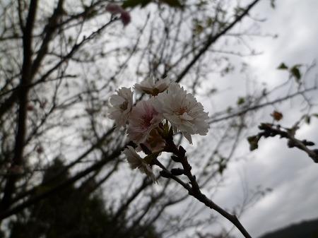 2012.11.05.mikamo 014