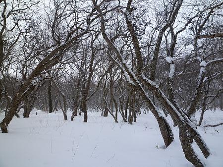 2013.1.18.koutoku 013
