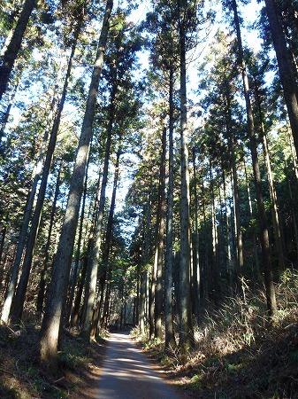 2013.2.25.kogashiyama 001