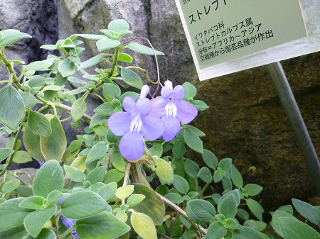 2013.2.25.kogashiyama 025