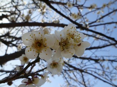 2013.3.9.ashikaga 017