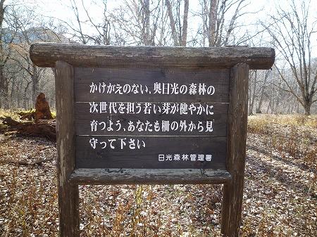sainoko2011015.jpg