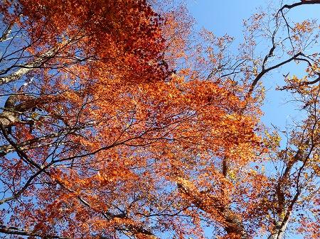 sainoko2011026.jpg