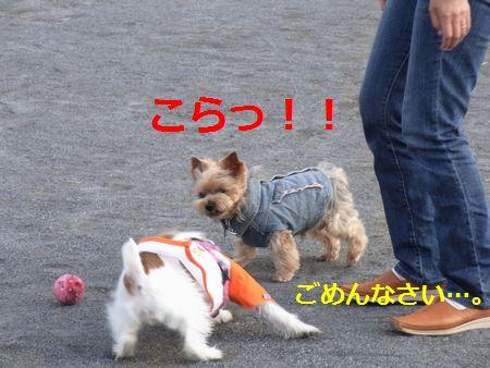 RIMG2010字入れ