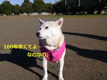 RIMG2066小