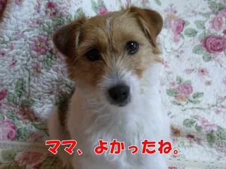 RIMG0009_convert_20100511081608.jpg