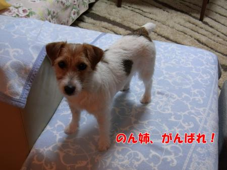 RIMG0564_convert_20100214170934.jpg