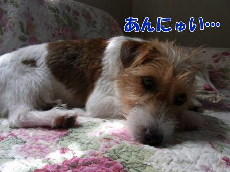 RIMG1229_convert_20100811151528.jpg
