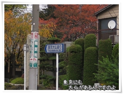 002-20101119.jpg