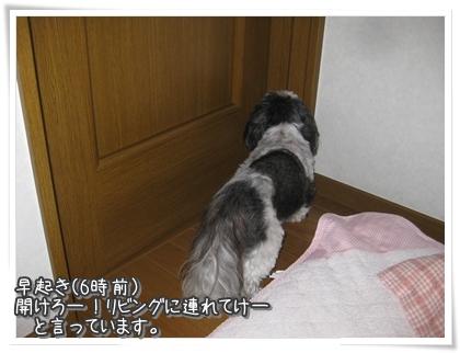 009-20101115.jpg