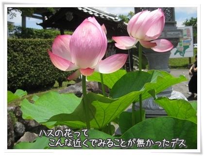 20100807-018.jpg