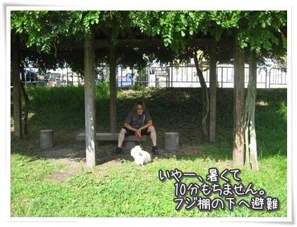 20100807-022.jpg
