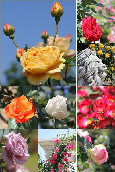 12-5-19-rose1.jpg