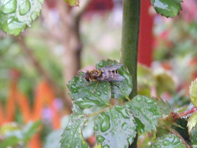 ミツバチの雨宿り