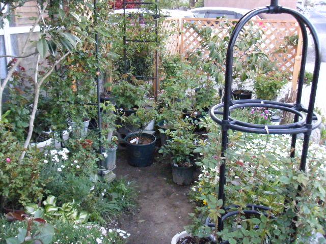 しかし、園芸店みたいに並びました。