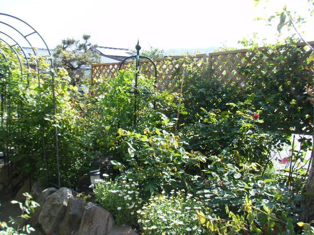 現在の庭の姿