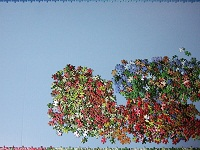 PanoramicFlowerGarden_003