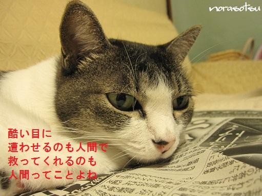 001_20101024105912.jpg