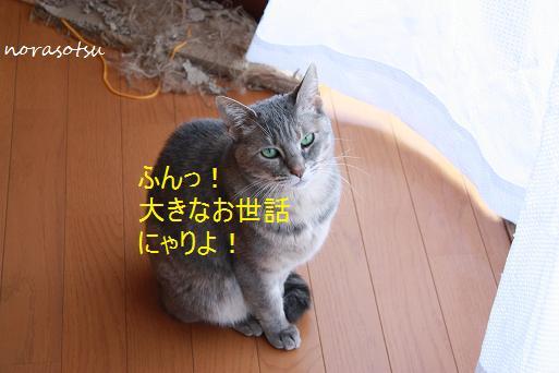 002_20100205074705.jpg