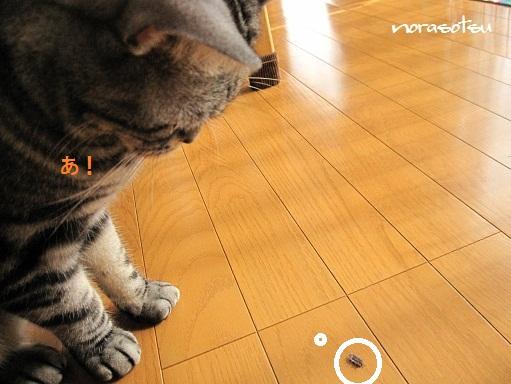 003_20100929105235.jpg