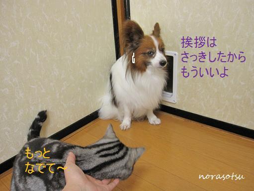 004_20100629163802.jpg