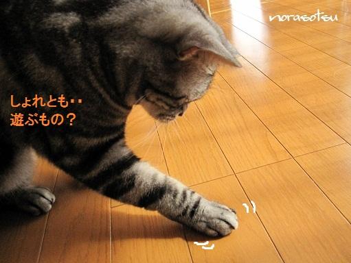 004_20100929105234.jpg