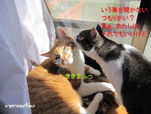 006_20100926125410.jpg
