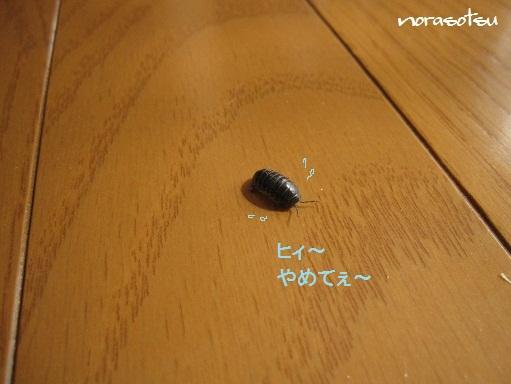 006_20100929105234.jpg