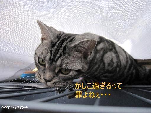 008_20100731103733.jpg