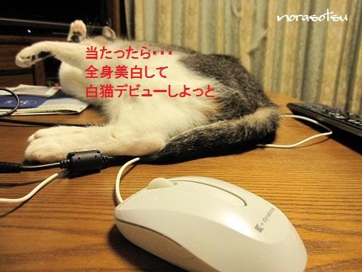 008_20101025202719.jpg