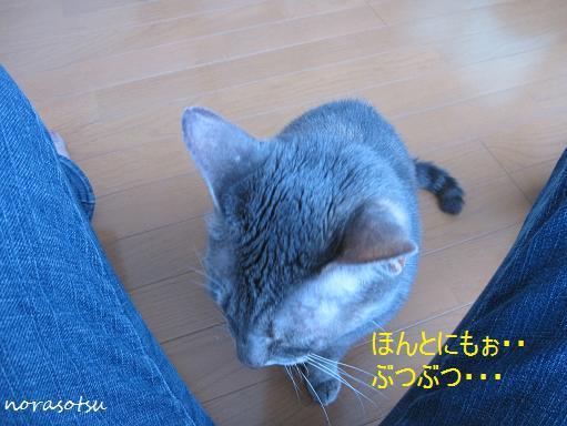 010_20100709151152.jpg