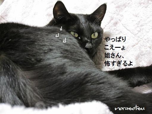 010_20100925112518.jpg