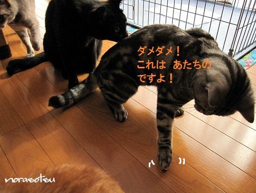 010_20100929105309.jpg