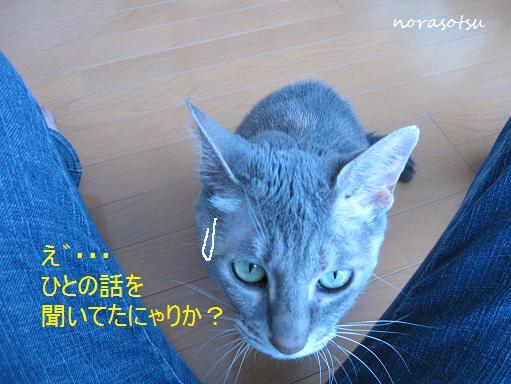 011_20100709151152.jpg