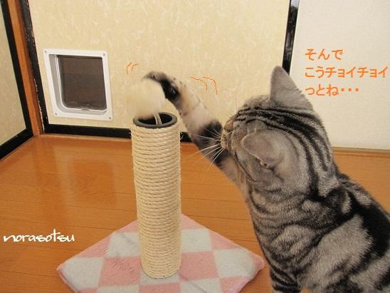 011_20101209080445.jpg