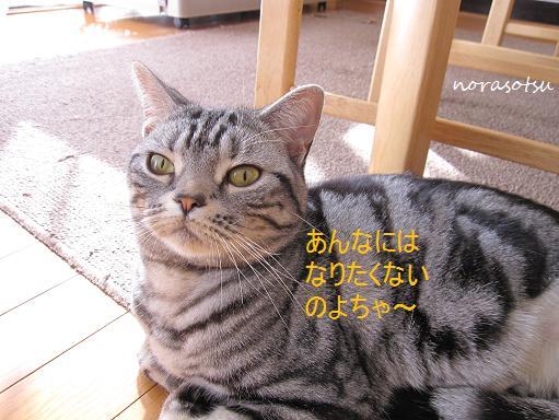 012_20100208145742.jpg