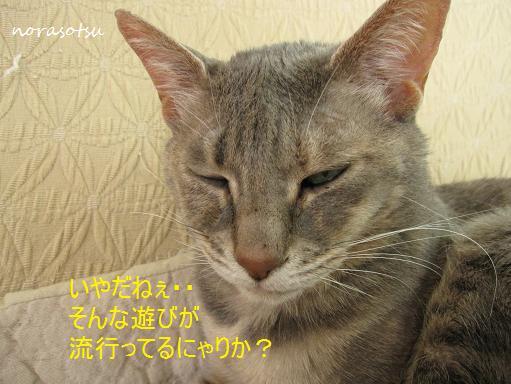 012_20100707155336.jpg