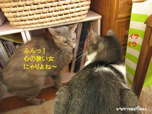 013_20100930104752.jpg