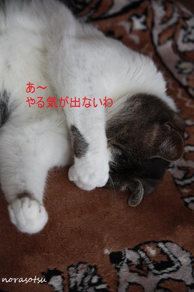 022_20100704213359.jpg