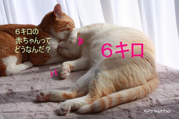 057_20100224165910.jpg