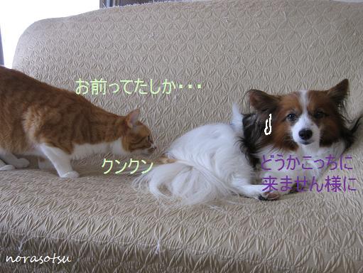 057_20100419165929.jpg