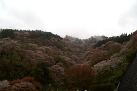 0413yoshino_1.jpg