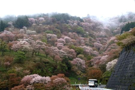 0413yoshino_2.jpg