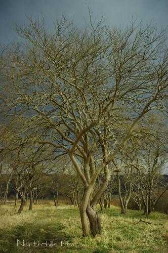 IMGP4647.jpg