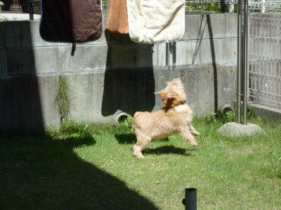 洗濯物にジャンプ[1]