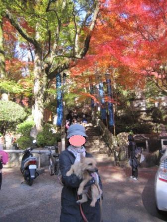 三滝寺IMG_6701 - コピー