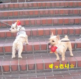 横浜IMG_2055 - コピー (2)