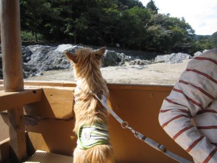 IMG_8928 - 平26・9嵐山