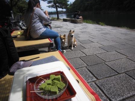 IMG_8932 - 平26・9嵐山