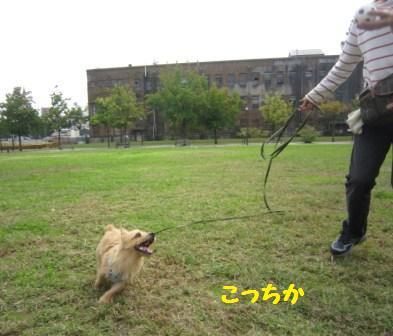 IMG_9041 広場でボール遊び